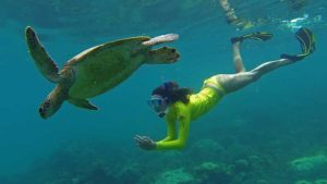 Snorkeling with turtles from Cairns
